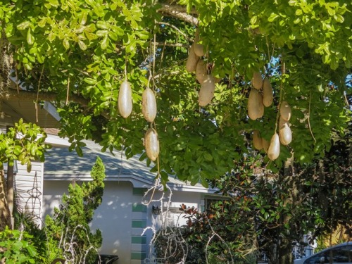 Interesting tree in Cocoa