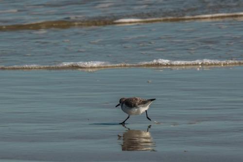 On the beach of Cumberland Island National Seashore GA